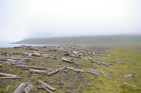 Treibholz aus Sibirien bei Bolungarvík