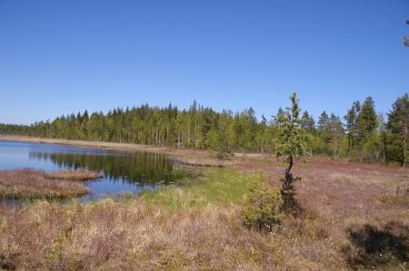 Sumpfige Landschaft