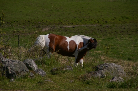 """""""Pferd"""