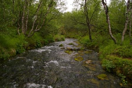 Im Kevo Naturschutzreservat