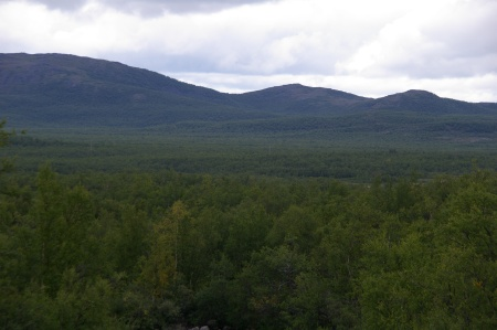 Wald mal von oben