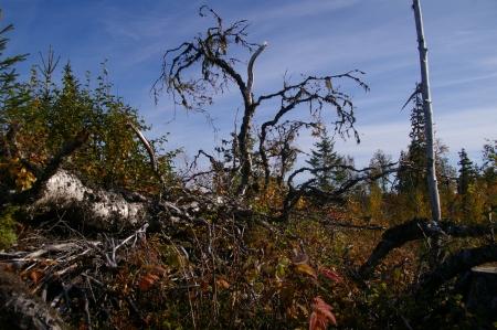 umgefallener Baum