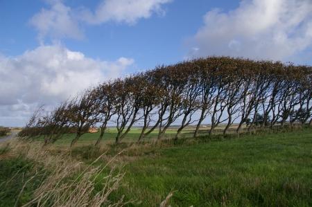 Die Natur macht Wind sichtbar