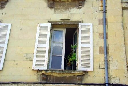 Grünpflanze am Fenster